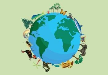 Biodiversity in our school